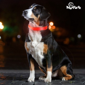 My Pet EZ LED Hundehalsband InnovaGoods - 1