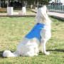InnovaGoods Kühlweste für Große Hunde - L InnovaGoods - 3